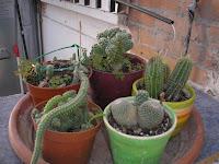 El jardin de pepa plantas de interior y cactus - Plantas de exterior resistentes al frio y al calor fotos ...