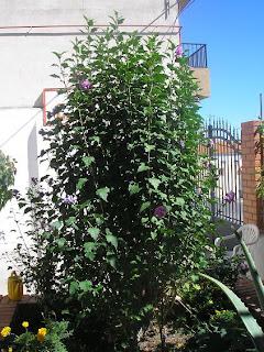 Arbustos perennes con flor naturaleza planta flor rojo for Arbustos de hoja caduca