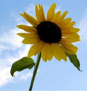 summer-flower Summer Wallpaper