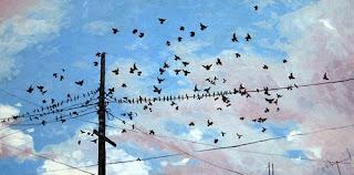 twittering birds