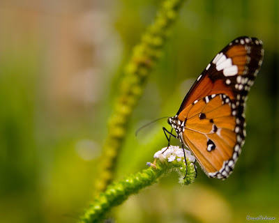 Butterfly Beautiful Wallpapers