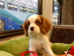 Roxy's first train ride