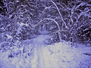 Spring Gulch Trail