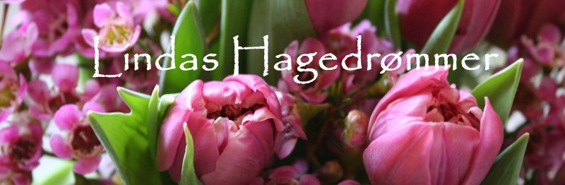 Lindas Hagedrmmer