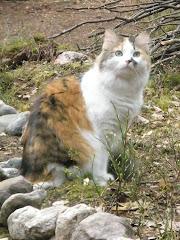 Neiti Söpö (2006 -  )