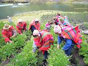 . de las contribuciones más importantes de la región andina para el mundo, . (cultivo de papa per㺠patata)