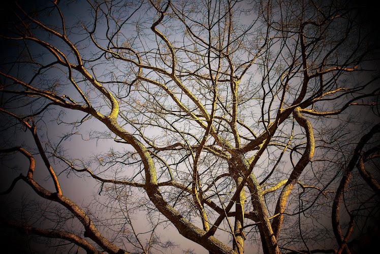 Pohon dan Ranting. 2006