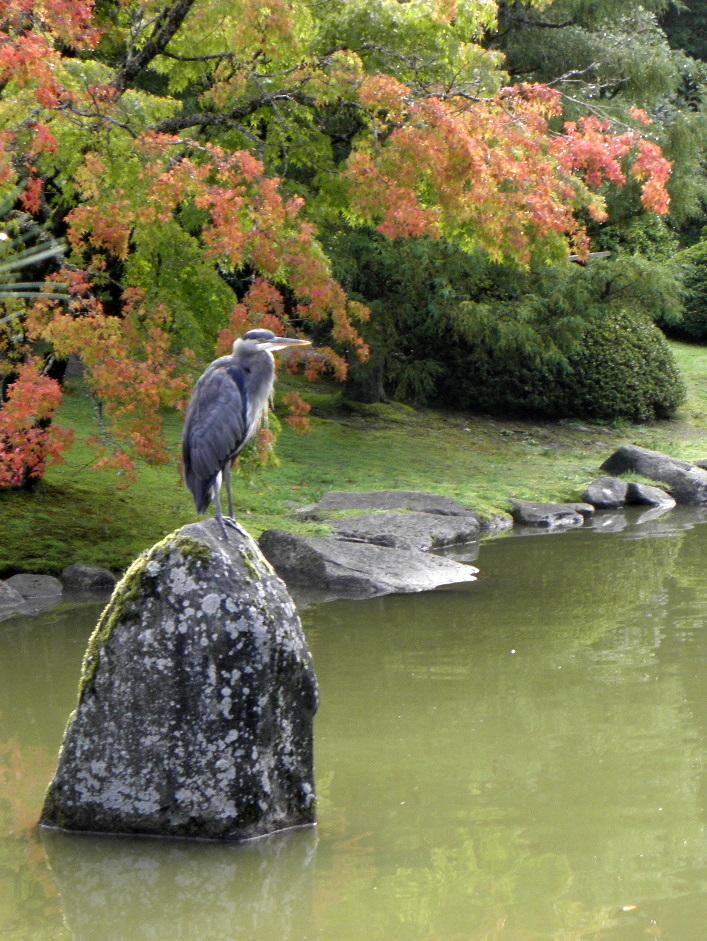 Seattle japanese garden community blog tour for The japanese garden