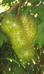 Soursop (Guanabana)
