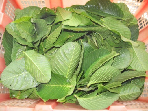 Download image Guava Leaves PC, Android, iPhone and iPad. Wallpapers ...