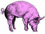 Pig (Wild boar in Japan and Elephant in Northern Thailand) (Yin, 4th Trine, Fixed Element Water)