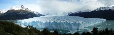 Calafate Argentino