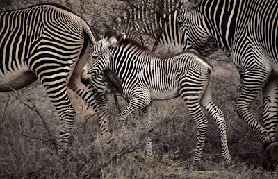 Animal Great  Migration   National Geographic   Foto national geographic Seen On  www.coolpicturegallery.us