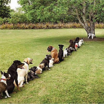 Queue of doggies for the loo