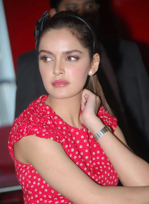 shazahn padamsee new from event hot images