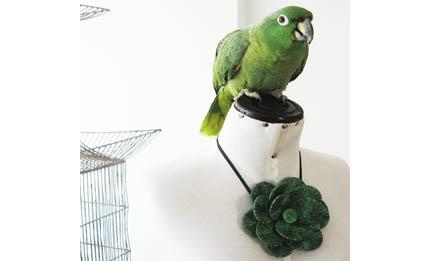 collar flor loro verde