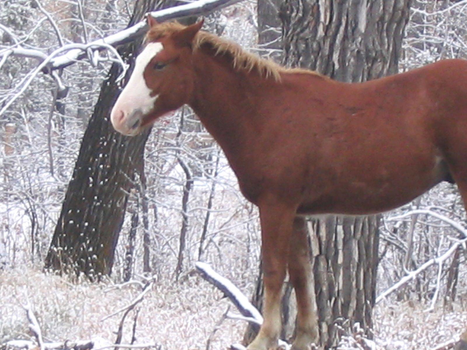 Cool   Wallpaper Horse Snow - IMG_0245  Trends_100117.jpg
