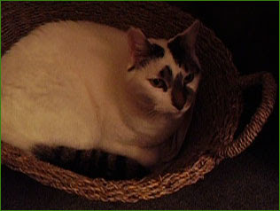 Sam in his basket...finally
