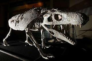 Reconstituição do Armadillosuchus, um crocodilo que vivia no deserto.