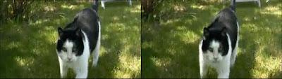 Imagem tridimensional para ser visualizada usando a técnica dos olhos cruzados