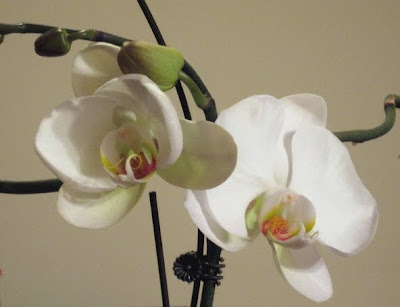 Orchid Photo