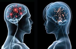 Cérebro e Transexualidade