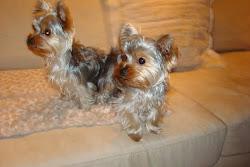 Coco & Mimi