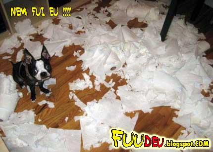 Cachorro rasgando um monte de papel cartas... fuudeu