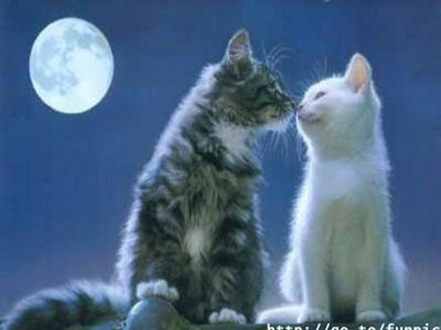cat wallpapers. Kissing Cat Wallpapers