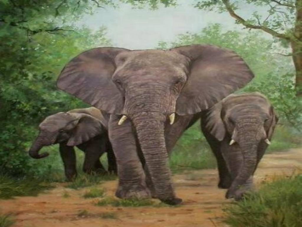 hd animal wallpapers hd elephants wallpapers