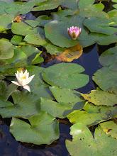 Dans le royal botanic garden...