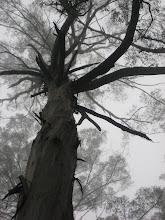 Forêt dandenong