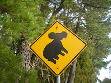 Attention aux koalas sur la route...