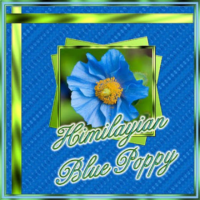 Bright Blue Poppy