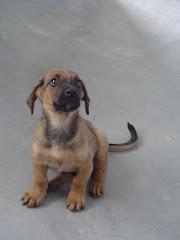 Scooby Filhote