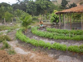 Plantação de Verdura