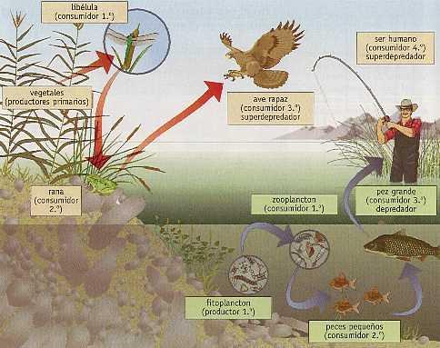 Ecococos ecosistema for Piletas de agua salada en zona sur