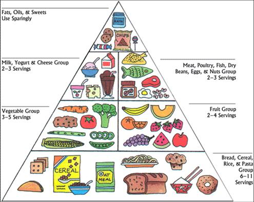 the_food_pyramid.jpg