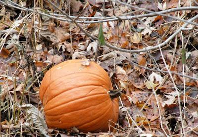 Mungo Says Bah, bushcraft, camping, outdoors, hiking, photography, nature, flora, fungi, fauna, mora knife, gransfor-bruks axe