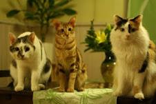 Fedja, Nexu ja Ronja