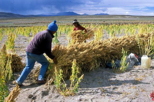 Cambio climático en Bolivia