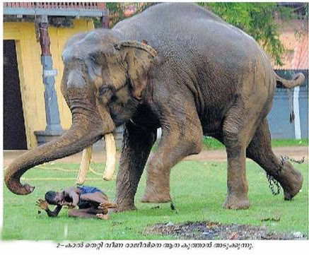 Elephant Attack In Kerala 2012 crazy malayalam...