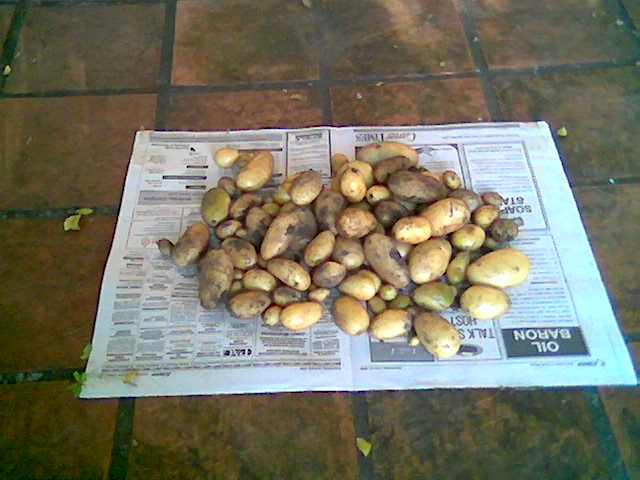 [foo.pl?q=1255796585-Potatocrop]