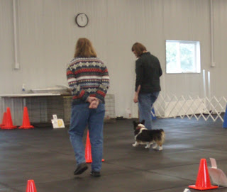 Akc Obedience Ring Size