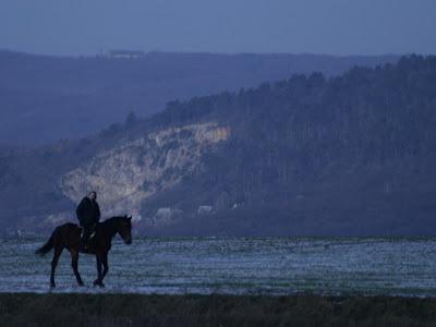 pilisvorosvar-daily-photo-horse