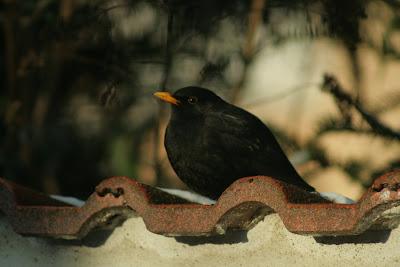 pilisvorosvar-daily-photo-bird