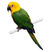 Burung-Burung Yang Memesona