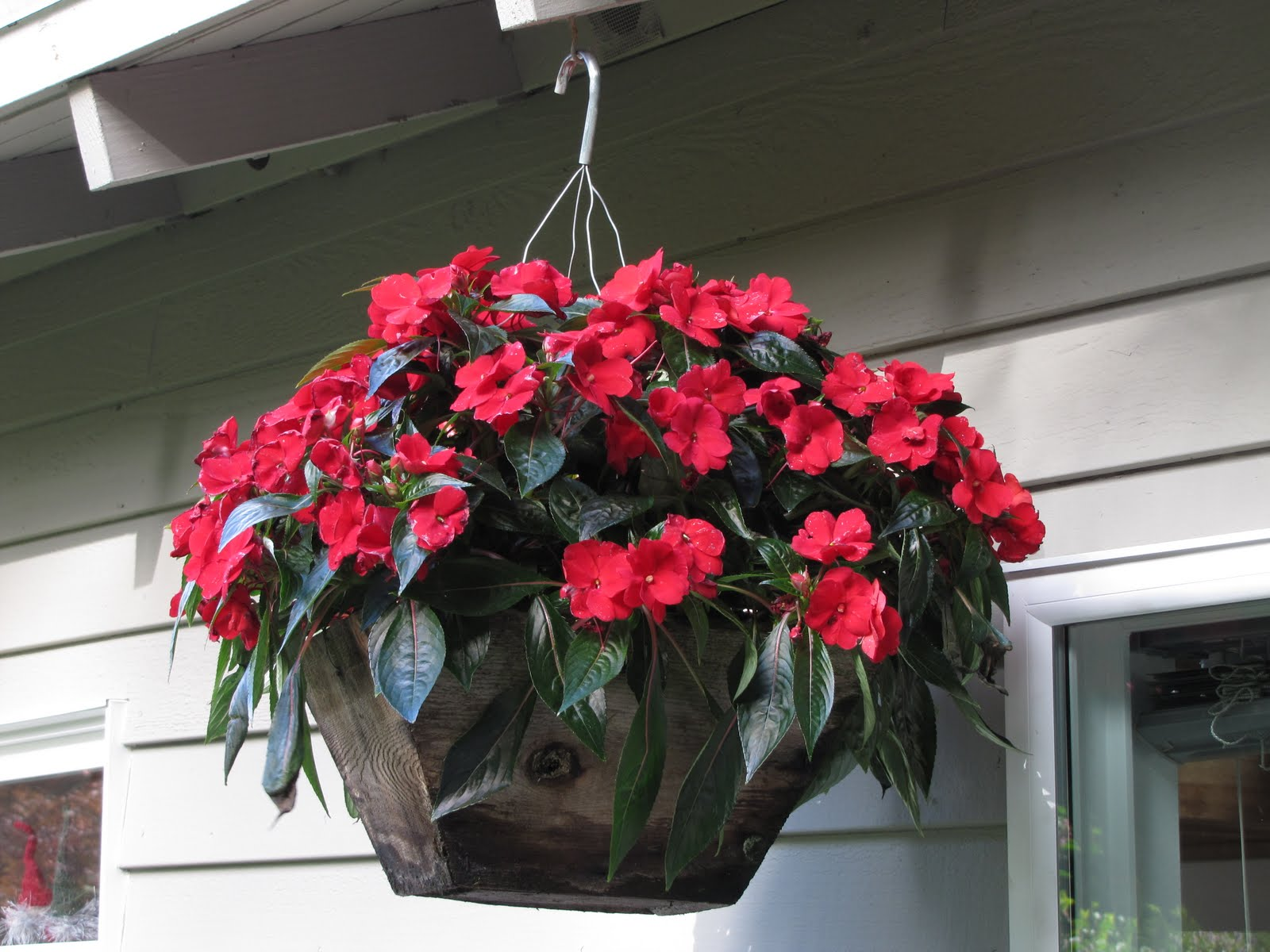 northwestern perspectives hanging baskets and containers. Black Bedroom Furniture Sets. Home Design Ideas