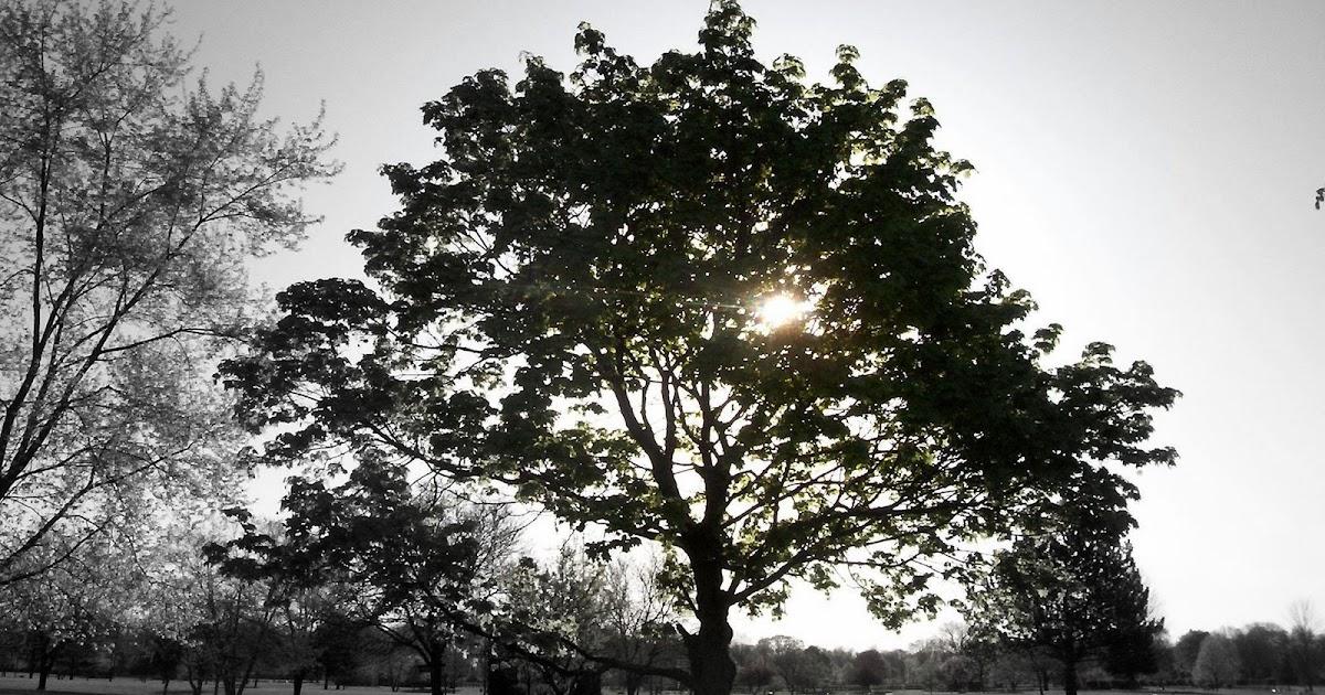 sunlight through trees black - photo #19