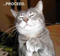 Funny+Cat+Proceed.jpg